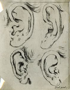 "Image of Four Ears, from the series ""Book for the Study of Drawings"""