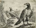 "Image of [Eagles on a Promontory], from the series ""Eagles"""